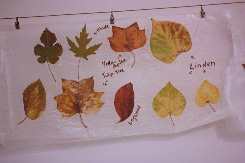 Autumn 2011 097