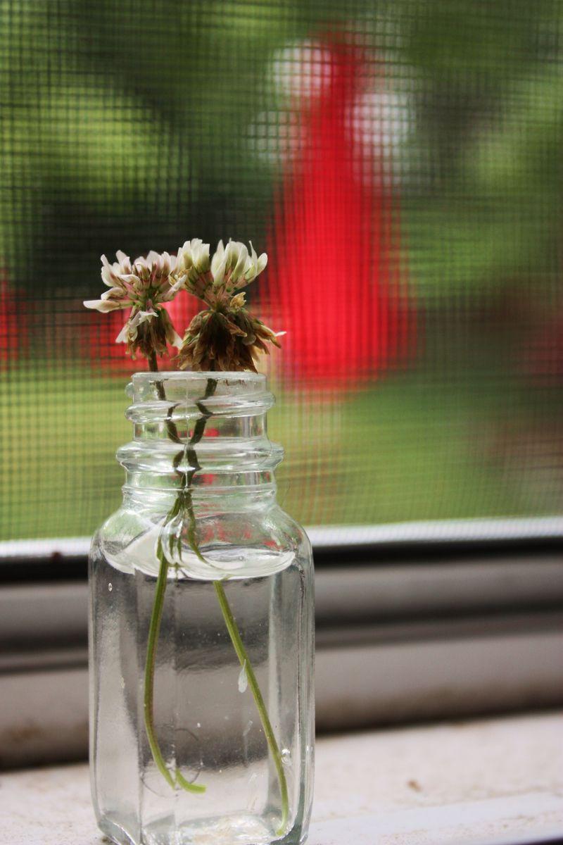 Sprinkler and herbs 061