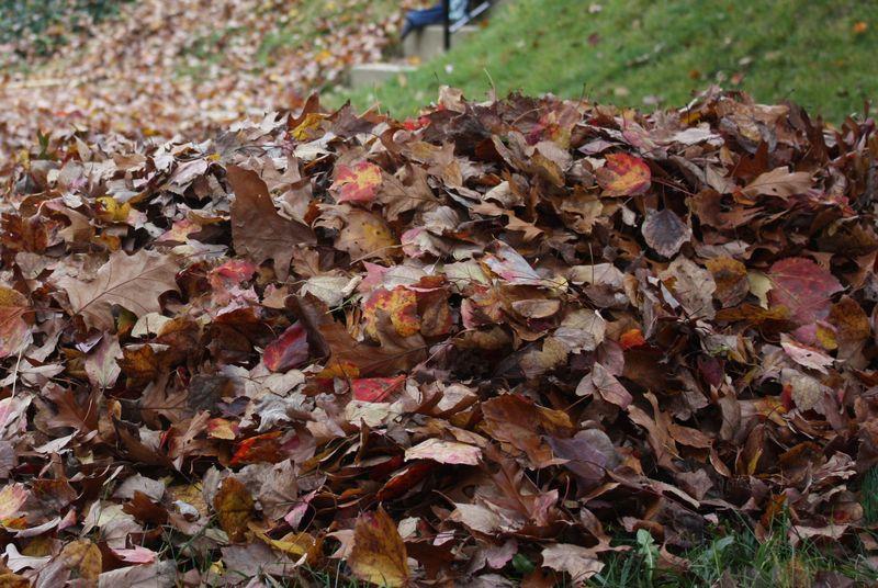 Autumn leaves 2011 057