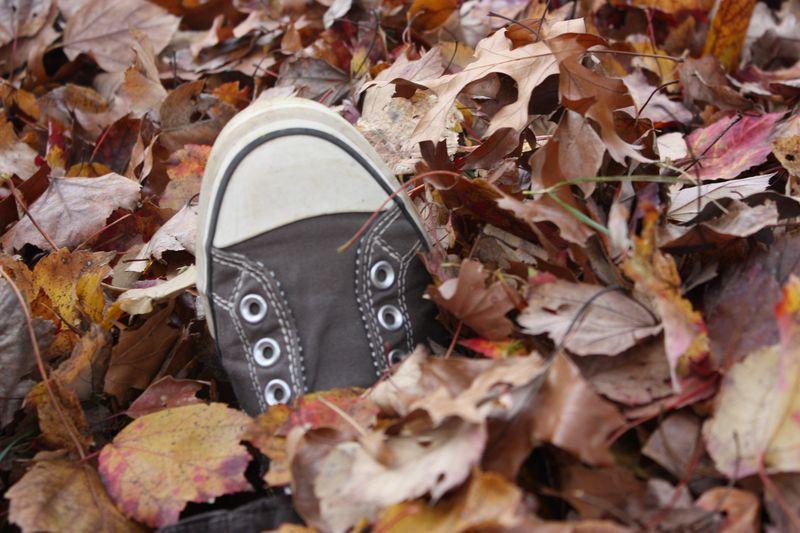 Autumn leaves 2011 116