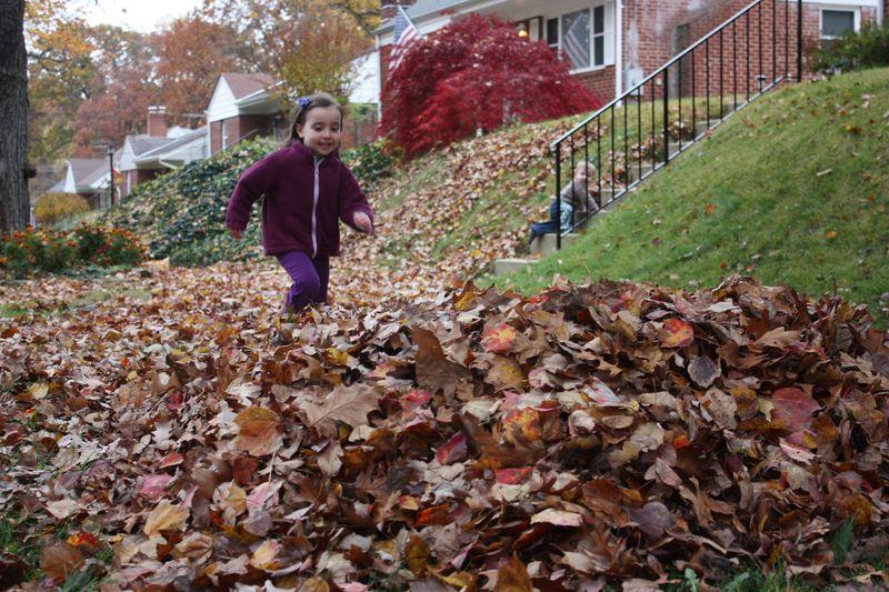 Autumn leaves 2011 061