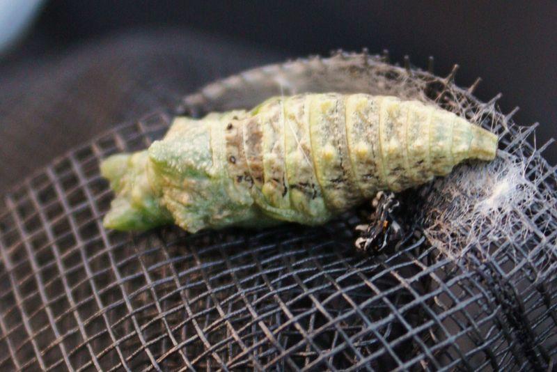 Caterpillar 028 - Copy