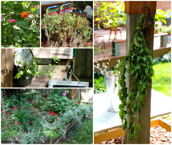 Plants Collage